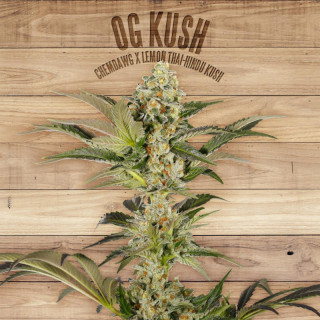 Og kush the plant organic seeds