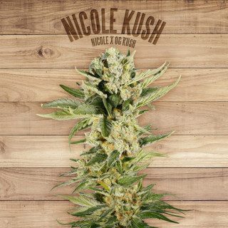 Nicole kush the plant organic seeds