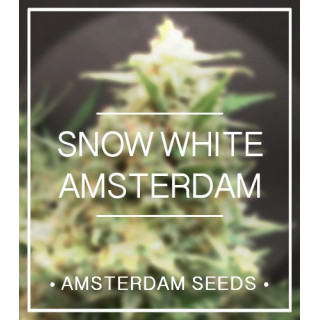 Snow white amsterdam seeds