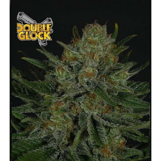 Double glock ripper seeds