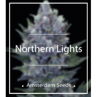 Northern lights amsterdam seeds