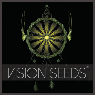 White widow féminisée vision seeds