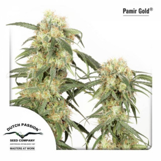 Pamir gold dutch passion feminisee